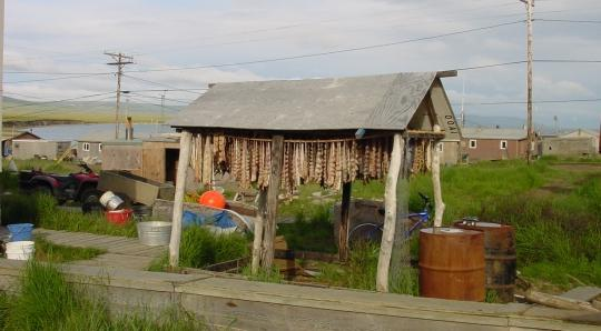 Fish drying in Toksook Bay, Alaska.