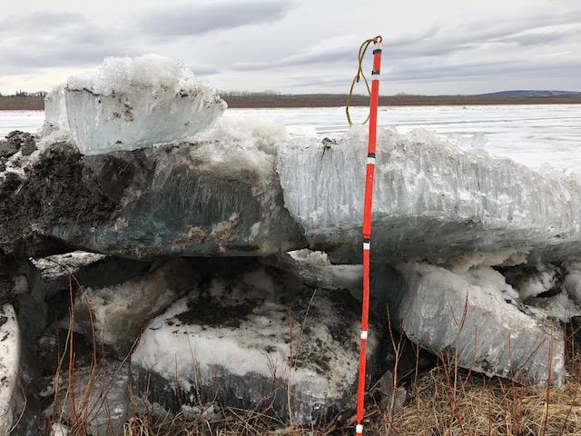 Sheets of thin, rotten Kuskokwim River ice have beached near Napaimute on April 30, 2018. The white marks on the ice pick sit 12 inches apart.