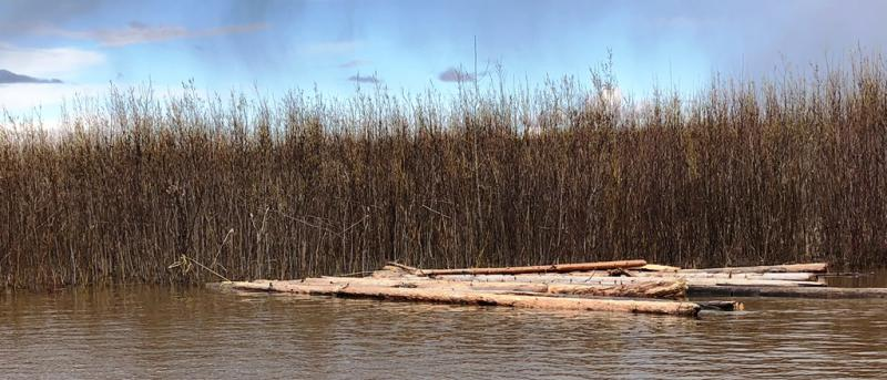 A nice log raft tied up waiting for the owner to come back for it. Photo taken May 15, 2018.