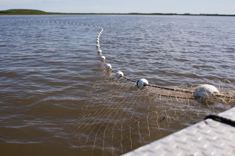 A gillnet stretches across the Kuskokwim River near Napaskiak on June 12, 2018.