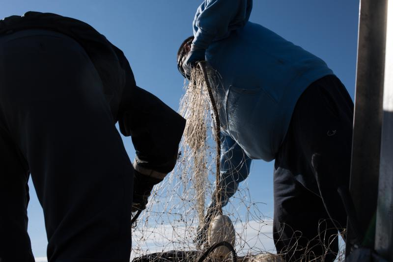 Napaskiak fishermen pull a gillnet out of the Kuskokwim River during a fishing opening on June 12, 2018.