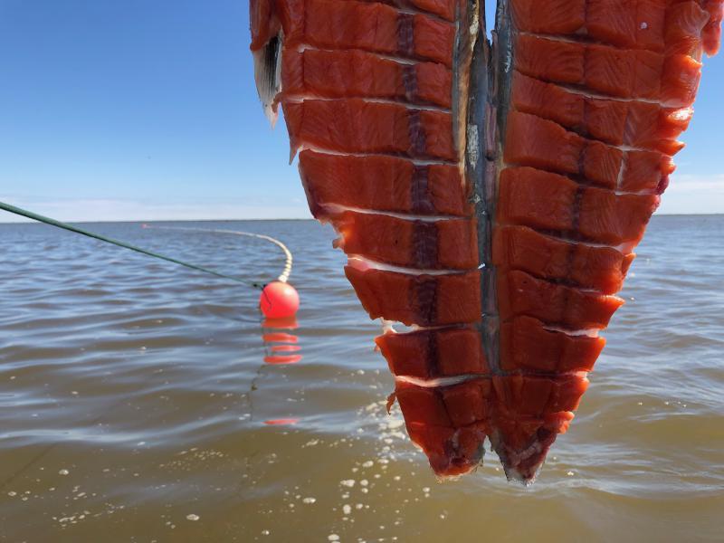 First Jack on the Kuskokwim River cut by Petra Harpak on June 12, 2018.