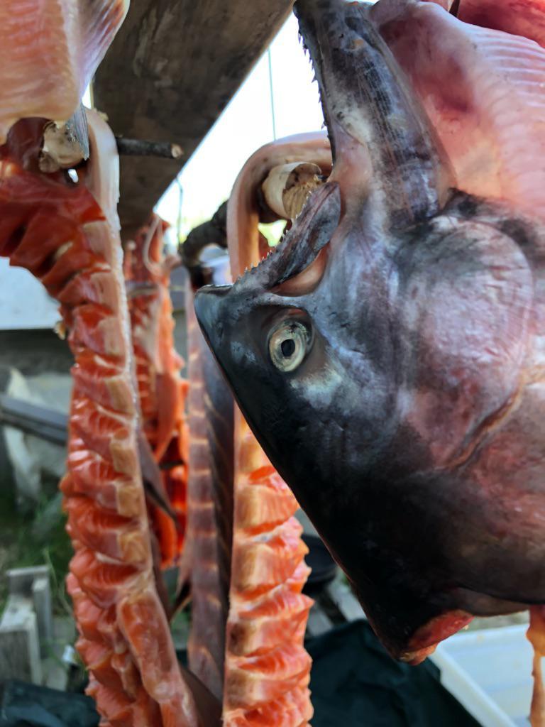 Fish head drying.