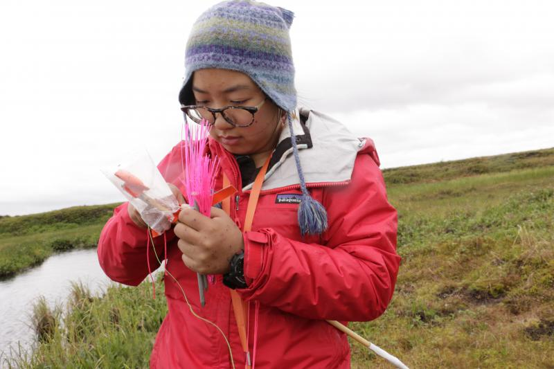Aiyu Zheng, a soon-to-be graduate student, checks soil moisture and temperatures as part of her research with the Polaris Project.