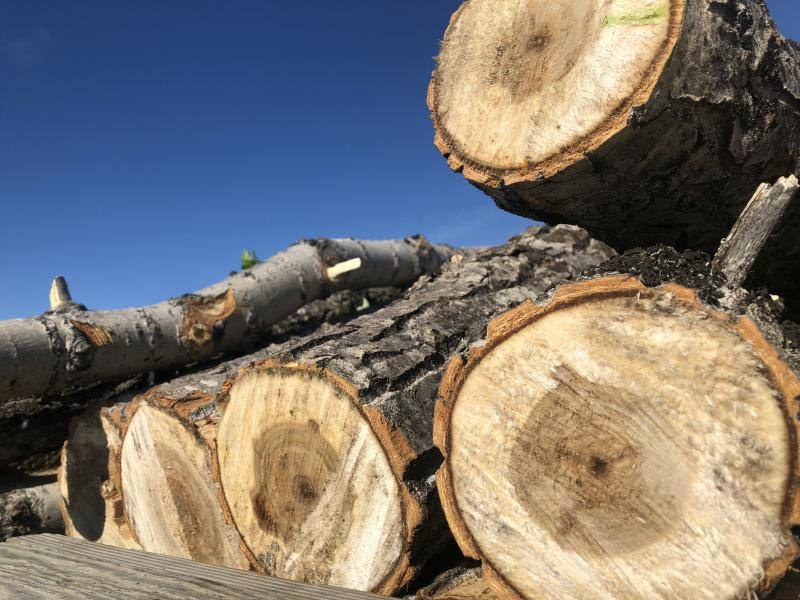 Cottonwood.