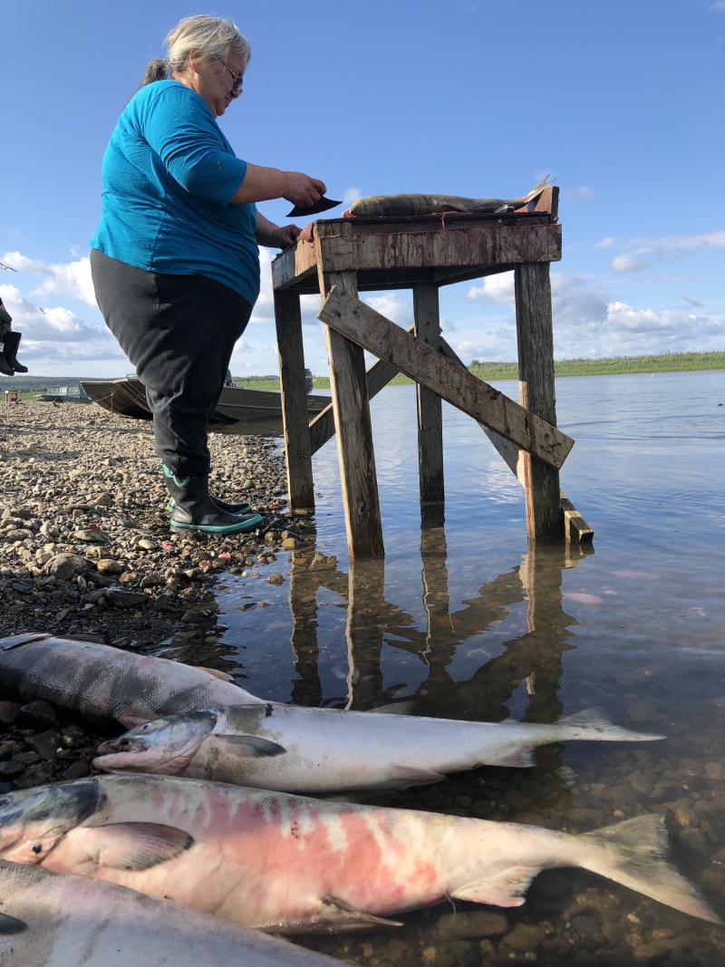 Evelyn Chamberlain cutting fish right on the Kuskokwim River on July 5, 2018. Women upriver from Aniak on up cut their fish right on the Kuskokwim River and throw fish guts right in the river.