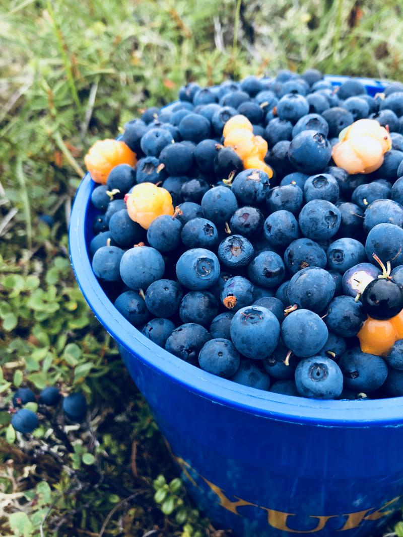 Blueberries mixed with a little bit of salmonberries.