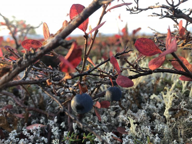 Blueberries are Teresa's favorite!