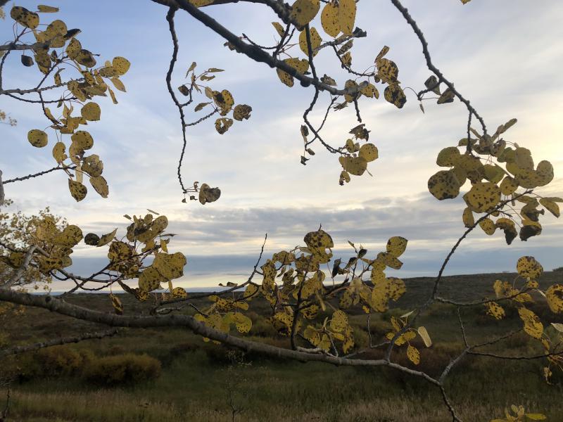 Overlooking the tundra in Bethel under aspen trees.