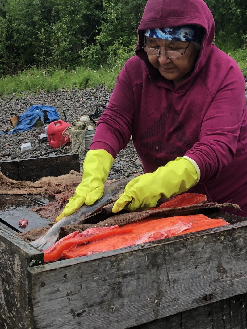 Nas Avakumoff cutting fish right on the Kuskokwim River near Napaimute.