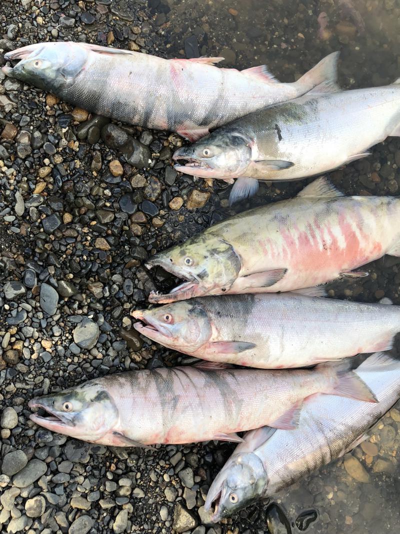 Nas Avakumoff's fish.