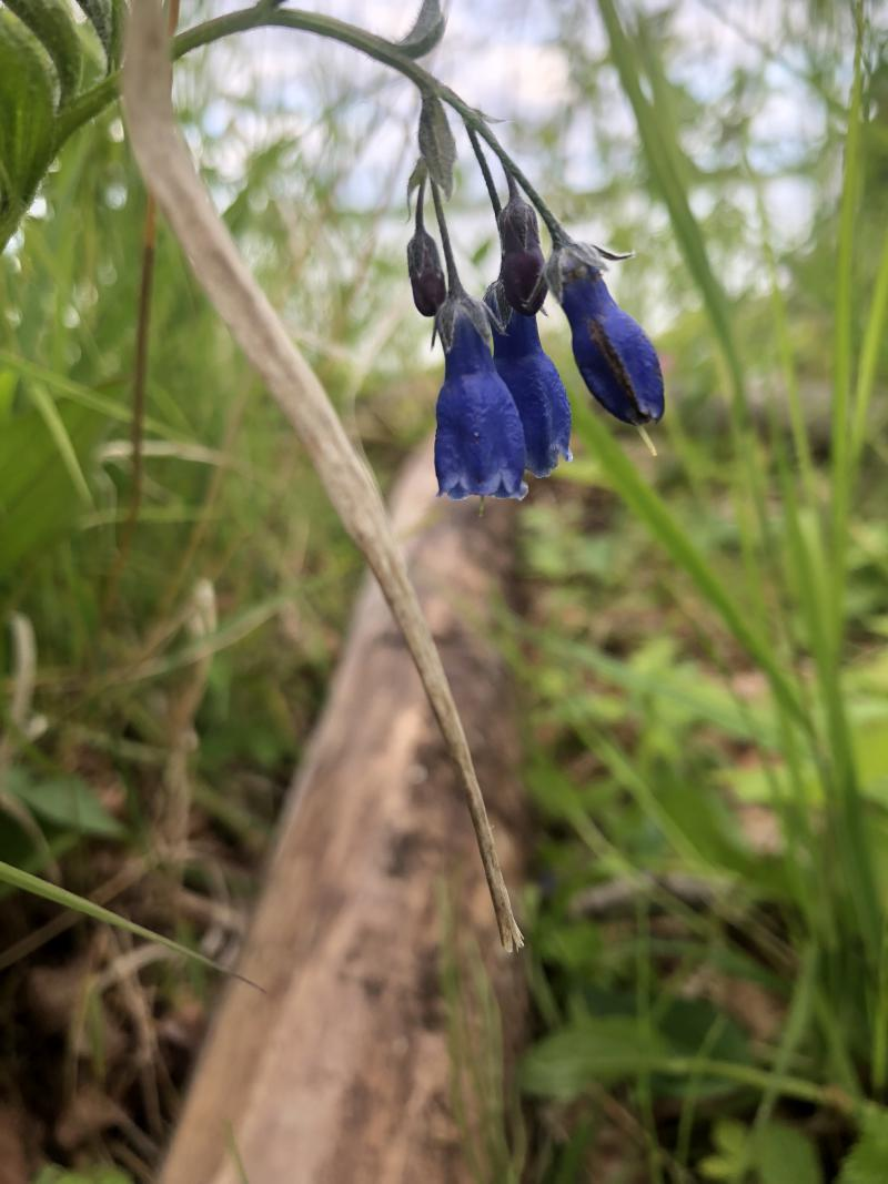 Don't forget how pretty the Northern Bluebells could be.