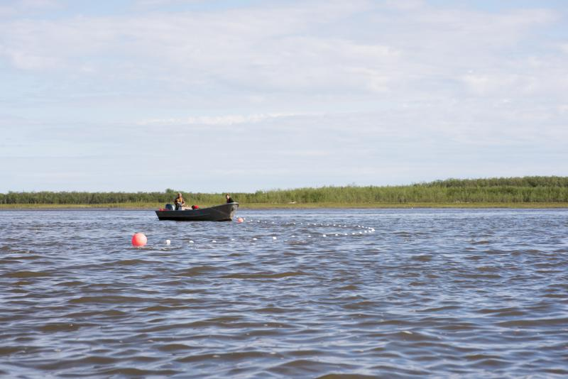 Salmon escapement goals are reached on the Kuskokwim River in Summer 2018.
