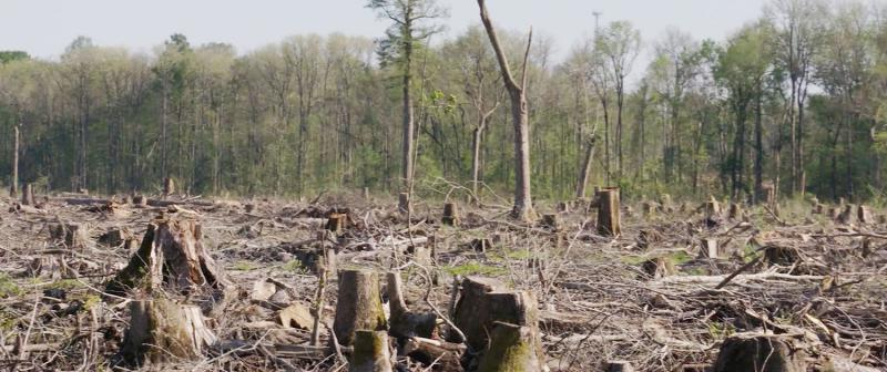 forest destruction to produce wood pellets for biomass energy generation