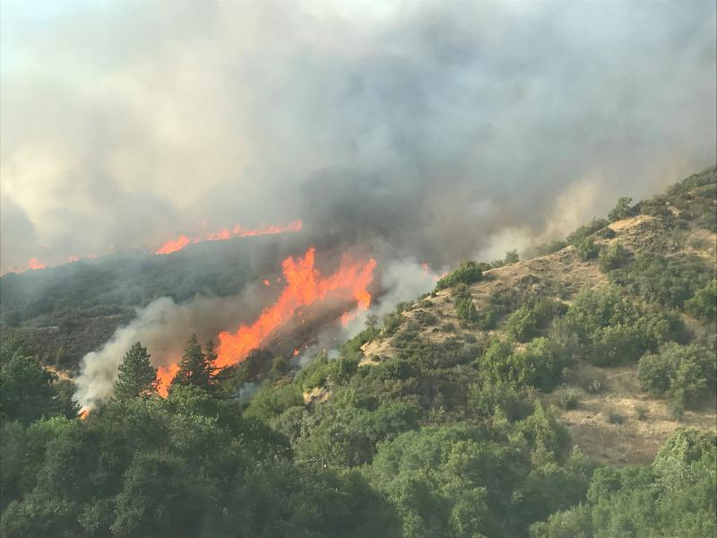 Flames of the Mendocino Complex fire sweep up a rugged, inaccessible hillside in a photograph distributed by the Mendocino National Forest