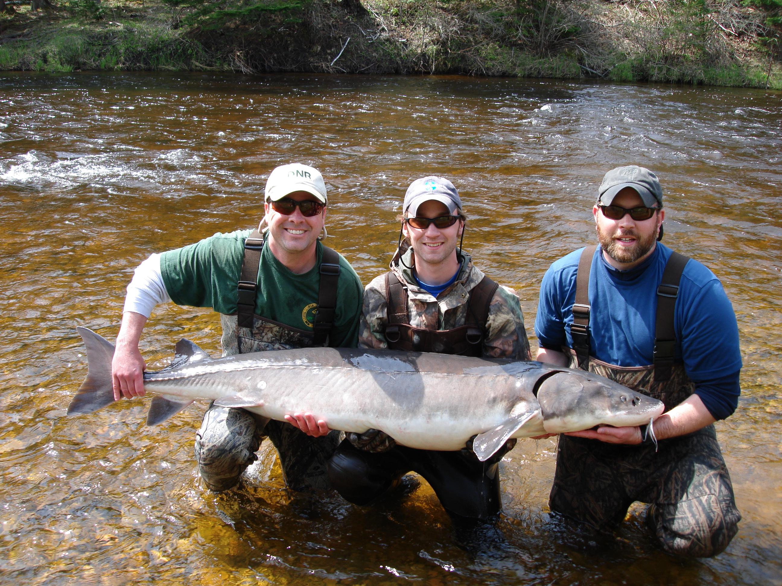 Sturgeon season to open on michigan lake michigan radio for Lake michigan fishing