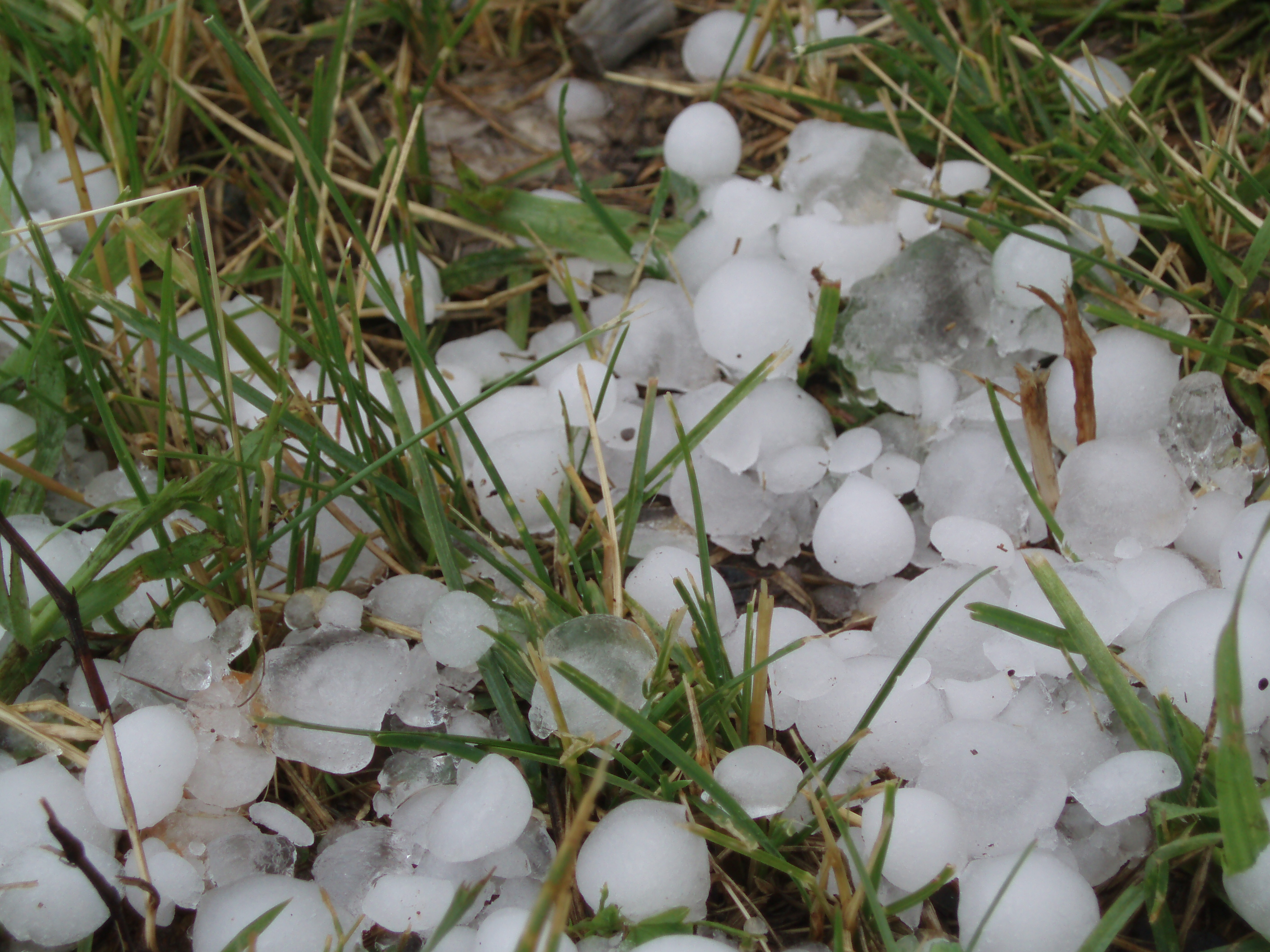 michigan farmers can get loan help after hail storms michigan radio