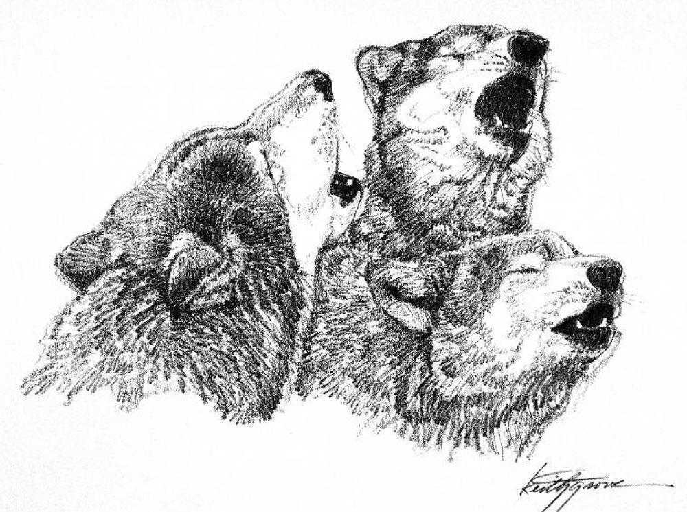 Feds make endangered species listing for Great Lakes wolves ...
