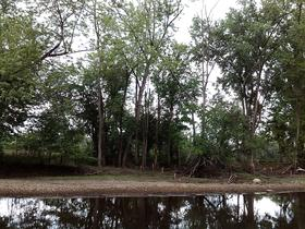 These trees will have to be removed in order to clean up the bank and bed of the Huron River in Ann Arbor.