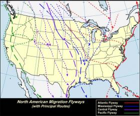 Migration flyways for migrating birds. Michigan sits in the Atlantic and Mississippi flyways.