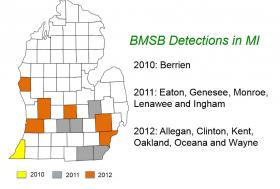 Counties where the brown marmorated stink bug have been found.
