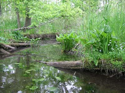 A section of the Kalamazoo River