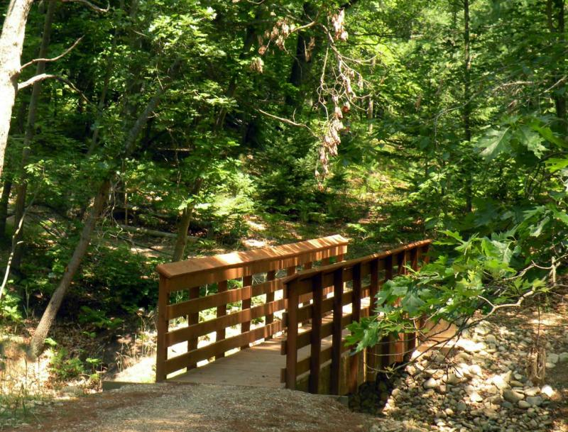 The Huron-Manistee National Forest