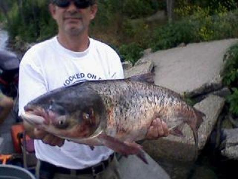 An Asian Carp caught in a canal a short distance from the entrance to Lake Michigan last year