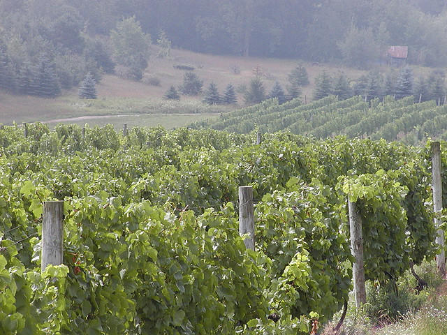 A vineyard in Leelanau County.