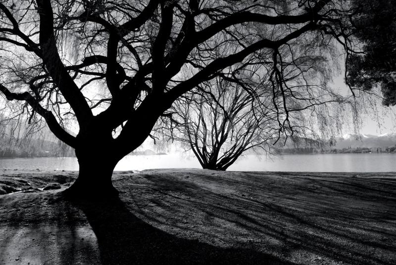 Tree at Lake Wanaka