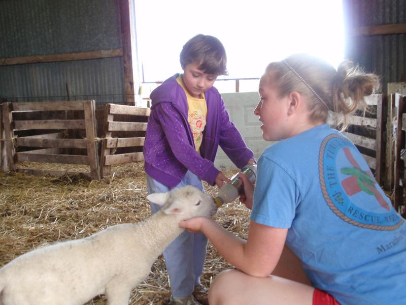 Sophie Knorek (right) and friend Leah South bottle feeding a lamb. Jack Knorek says farm life has taught their kids important lessons about life and death.