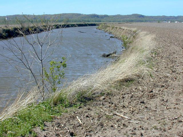 As part of the Conservation Reserve Program, farmers are paid to put  in grassy strips to act as buffer zones along waterways. (Photo by Lester Graham)