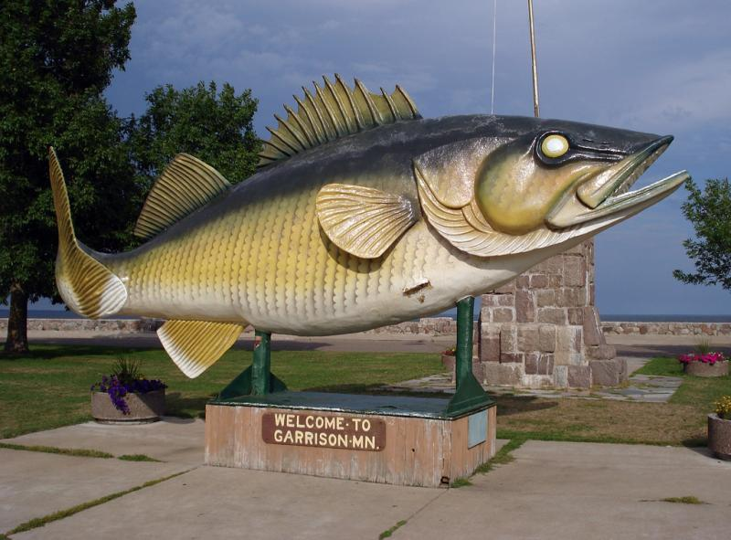 "Anglers in lakes Huron and Erie who catch tagged walleye could earn $100. This photo was taken in Garrison, MN - the proclaimed ""Walleye Capitol of the World."""