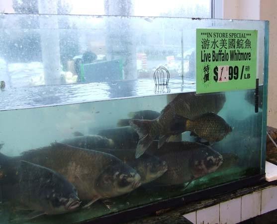 Live fish for sale at the market.