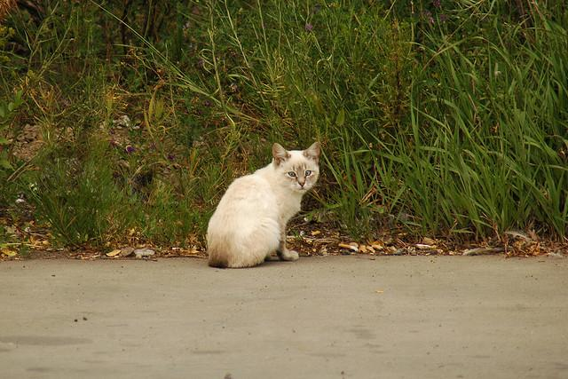 One estimate puts the feral cat population in the Detroit area at 657,000.