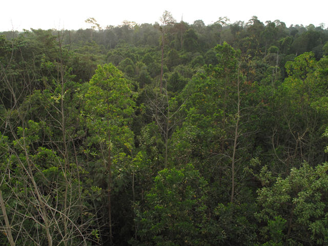 Peat forests like this one in Indonesia are home to orangutans, Sumatran tigers and Asian elephants.