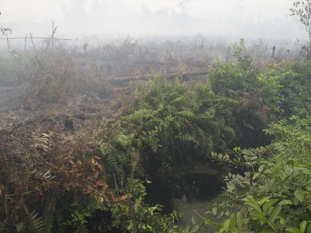 Burning peat forests in Indonesia to make way for palm oil plantations.