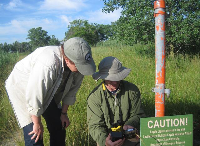 Bill Dodge and Holly Hadac check a trail camera. The didn't get any shots of coyotes, just photos of some logs and themselves setting up the camera.