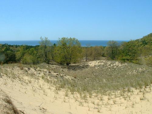 Dunes near Saugatuck