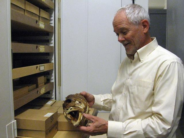 Bill Fink is the Museum of Zoology's Curator of Fishes.
