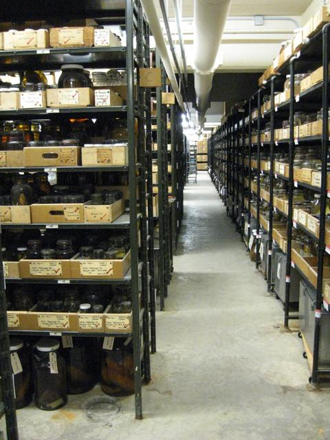 The fish collection contains about 3.5 million specimens, making it the largest university-based collection in the world.