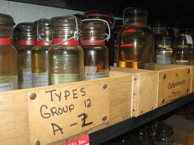 A special locked room contains type specimens - when a new species is described, one individual fish is saved as the official name bearer.  These fish are very biologically valuable.