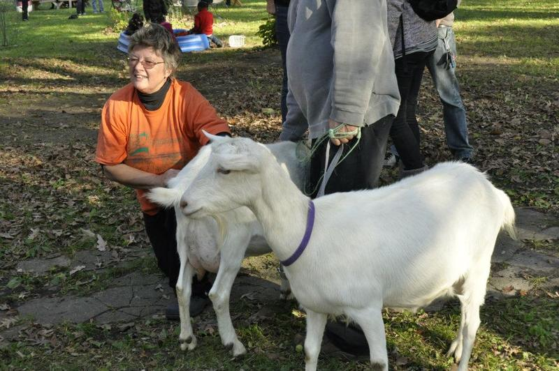 Riet Schumack with her milking goats in northwest Detroit
