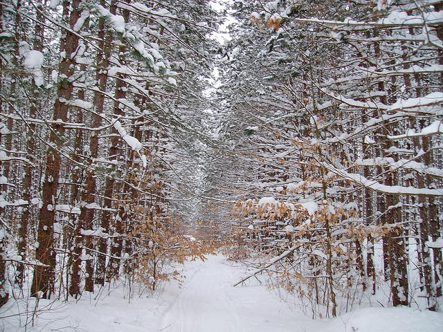 A snowmobile trail near Cadillac, Michigan.