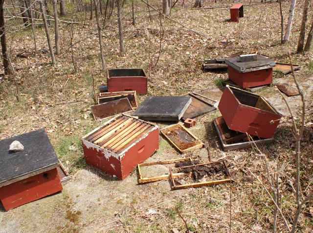 The beehive strewn around the field after the bear had its feast.