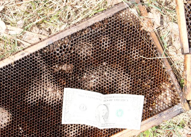 A hungry black bear left its paw print in a frame of Terry Klein's beehive.