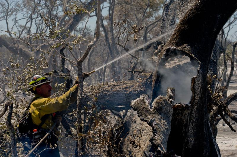 A firefighter from California extinguishes a smoldering tree at Camp Bullis, TX, on Friday, September 12, 2011. Michigan sent DNR staff to help fight fires in one of the worst wildfire seasons in Texas' history.
