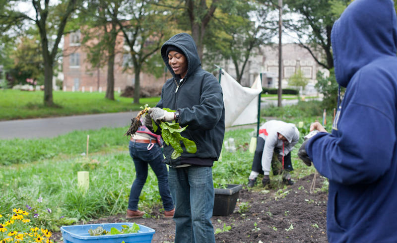 "The ""Feedom Freedom Growers"" working in Detroit (photo posted on the ""On Being"" website)."