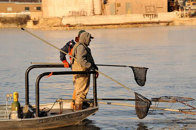 Searching for Asian Carp in the Great Lakes. The Obama Administration released its carp strategy today.