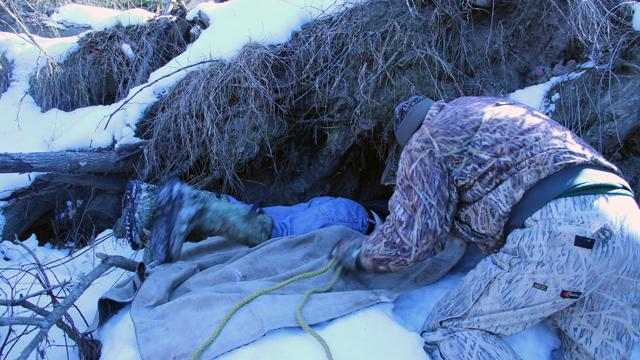 DNR bear researchers climb into the den to pull the tranquilized bear out.